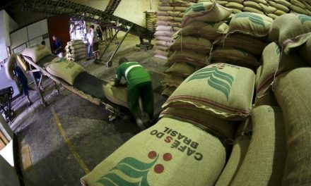 Cecafé: Brasil exporta 3,4 milhões de sacas de café em agosto