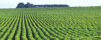 Secretário de Agricultura dos EUA divulga nomes dos membros para sete Comitês Consultivos de Política Agrícola para o Comércio