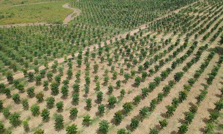 Investimento verde: plantio de árvores une ganho ambiental a retorno financeiro