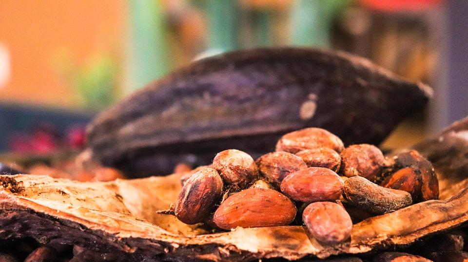 Setor do cacau-chocolate brasileiro diante dos desafios da internacionalização