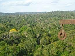 Quinze anos para salvar a Floresta Amazônica de se tornar savana