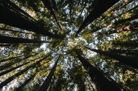 BrazilFoundation e Conservação Internacional lançam ação conjunta para arrecadação de fundos às comunidades da Amazônia