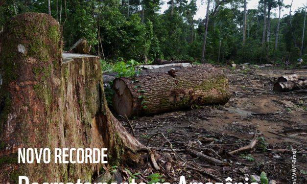 Destruição do meio ambiente no Brasil pode fechar portas comerciais no exterior