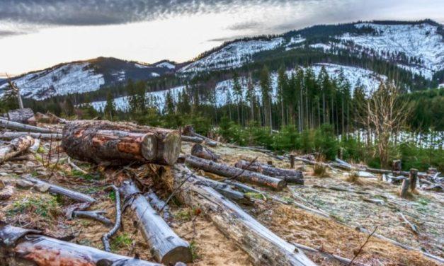Cresce a devastação de florestas na Europa