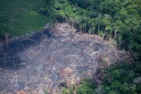 Devastação da Amazônia já afasta investimentos, alerta presidente da Ramboll