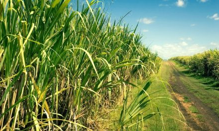 Agronegócio: Balança Comercial Paulista tem superávit de US$ 12 bilhões
