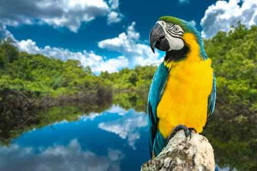 Movimento da Amcham reúne 49 empresas com previsão de investir R$ 12,7 bilhões em preservação ambiental no Brasil